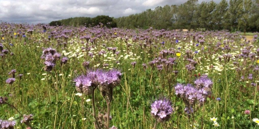 Flower mix on farm pulls in pollinators and public interest